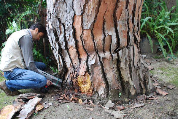 Stabilità degli alberi VTA Federico Simone Milano
