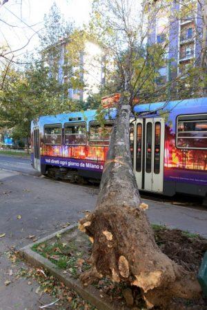 schianto di albero su mezzo pubblico
