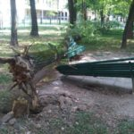 Milano 20120727 02983 150x150 - Alberi caduti - stabilità degli alberi e maltempo