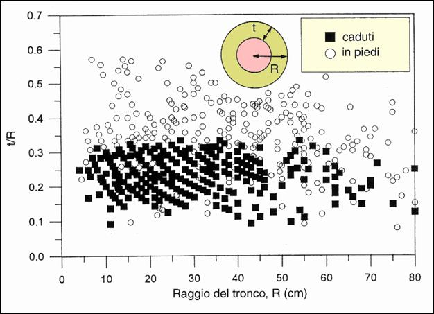 vta2 clip image002 0002 - VTA - valutazione di stabilità degli alberi