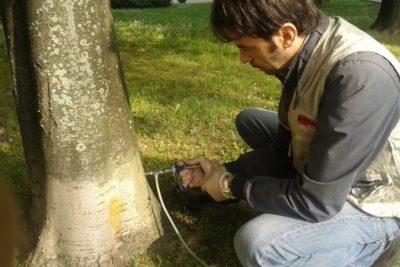 Gestire il Verde Servizi Endoterapia Federico Simone