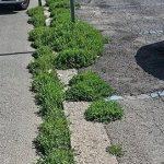 Erbe infestanti e1543088539905 150x150 - Bonus verde detrazioni fiscali per la sistemazione dei giardini privati