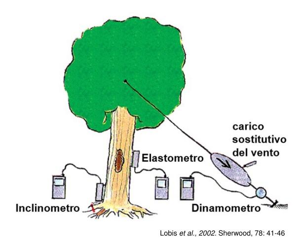 2018 11 05 131946 - Pulling Test - prova di trazione controllata dell'albero