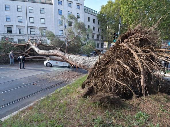 Alberi caduti Roma Foto Corriere della Sera - Pulling Test - prova di trazione controllata dell'albero