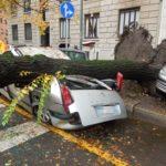 DSCN6689 1024x768 mod 1024x768 150x150 - Alberi caduti - stabilità degli alberi e maltempo