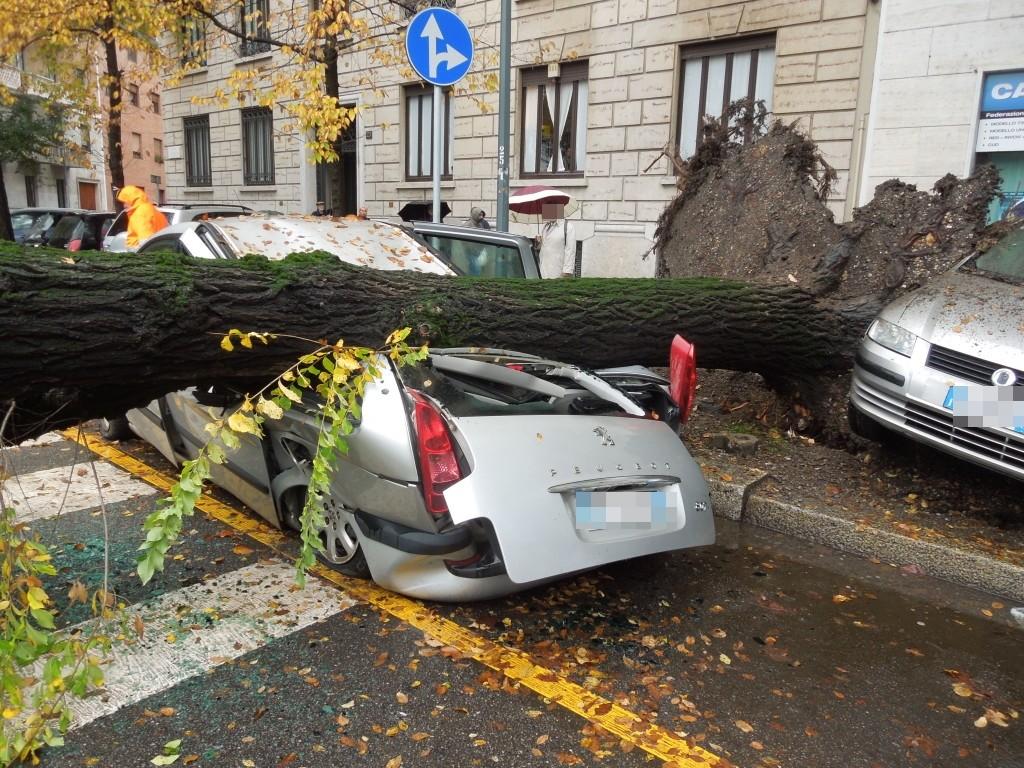 Alberi caduti – stabilità degli alberi e maltempo