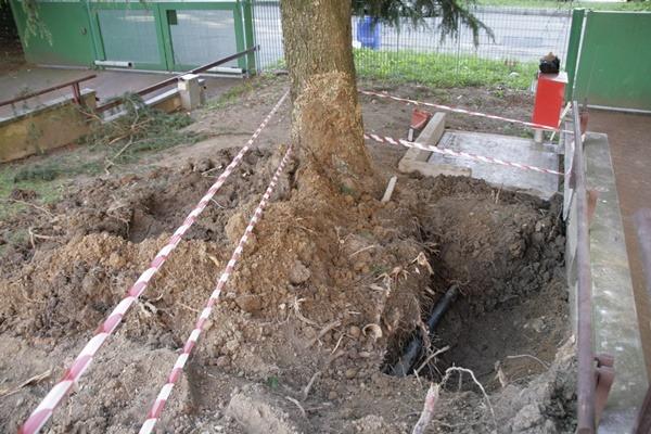 MG 0674 2017 09 18 18 04 28 UTC red - Alberi caduti - stabilità degli alberi e maltempo