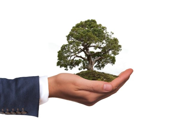 Calcolo del valore ornamentale degli alberi a Milano