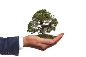 Valore ornamentale albero