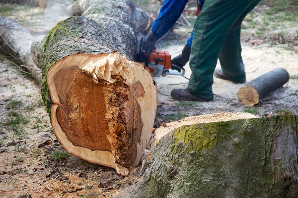 Tagliare un albero in un giardino privato a Milano