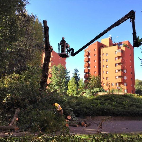 Abbattimento albero condominio