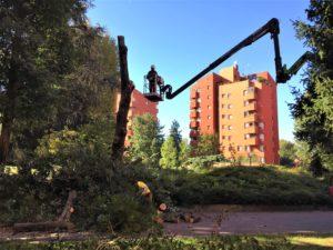 Abbattimento degli alberi nei giardini condominiali