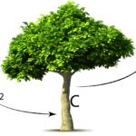 Albero e CO2
