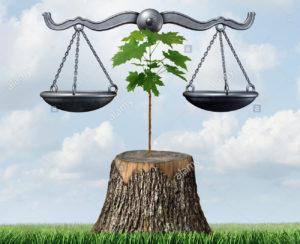"""Alberi """"bene comune"""" - L'abbattimento degli alberi e il diritto"""