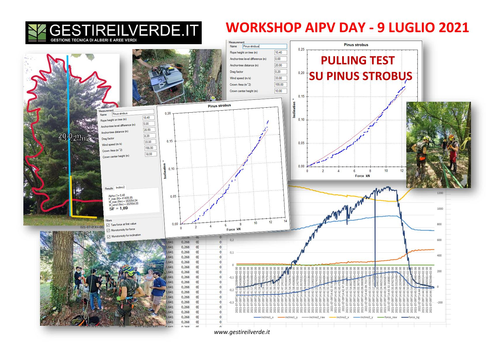 AIPV DAY 2021 Workshop Gestire il verde - Pulling Test Pinus strobus