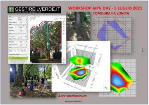 AIPV DAY 2021 Workshop Gestire il verde - Tomografia Acer saccharinum